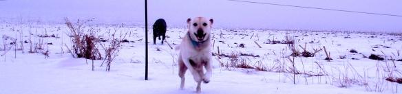 Pasture Run