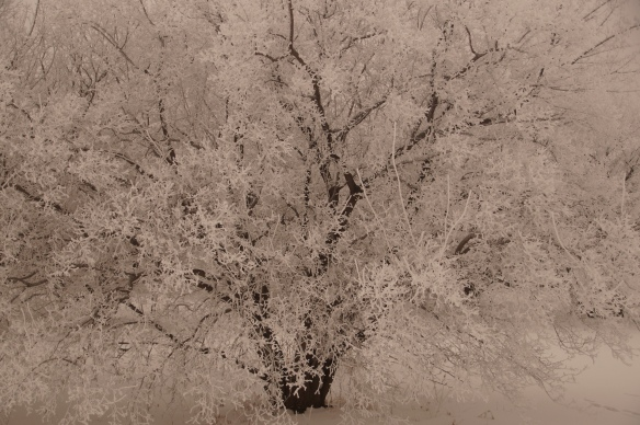 Blanketed in Frost