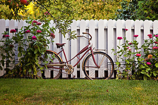 Vintage Schwinn Bike & White Picket Fence by csterken